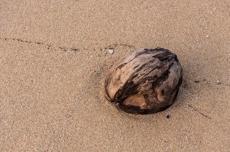 Coconut on the beach, Rayong, Thailand photo
