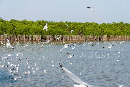 wingspread: Seagull fly