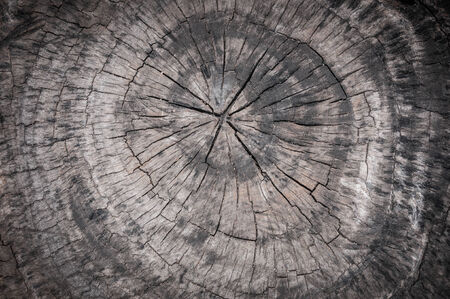 grunge tree trunk texture photo