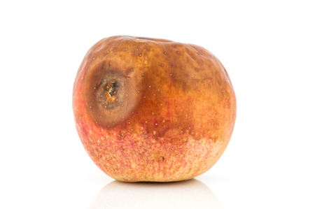 putrid: mold apple isolated on white background, concept for bad food