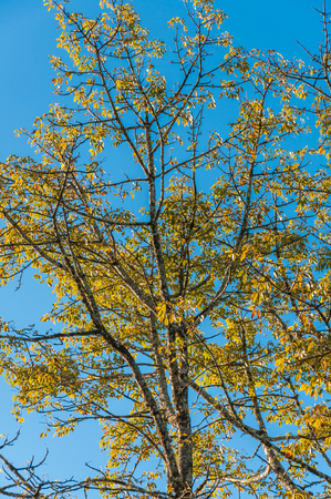 Tree branch against blue sky background. Stock fotó - 99585415