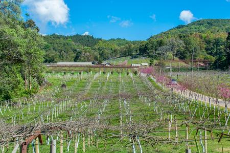 Plum tree field in autumn. Stock fotó