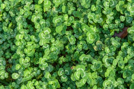 Green leaf background. Stock fotó