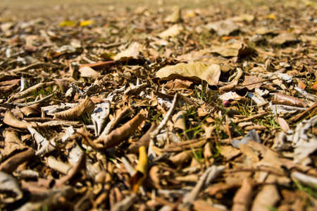 dry leaves Stock Photo