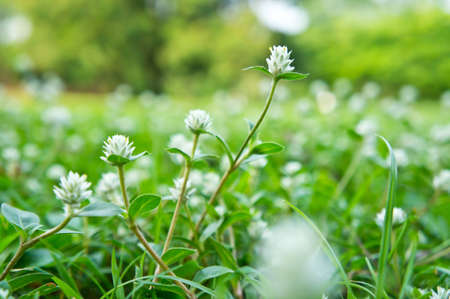 white flowers on grass field