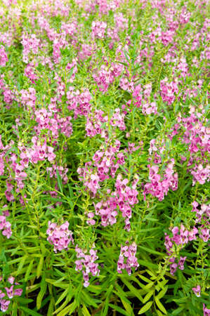 bunch of pink flowers Stock Photo