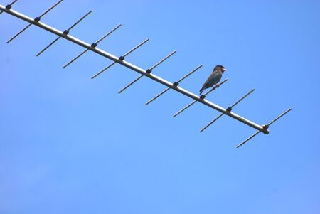 blu sky: Birds perched on antenna with blu sky background Stock Photo