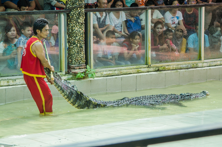 rousing: Phuket, Thailand - January 14: The show with the man and crocodile show for people and traveller to see at the phuket zoo. on January 14,2017 at the zoo in Phuket, Thailand. Editorial