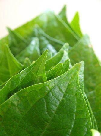 Piper leaf as Thai food side dish