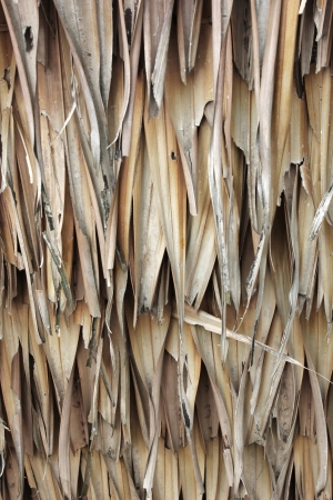 wither: The brown wither bulrush wall