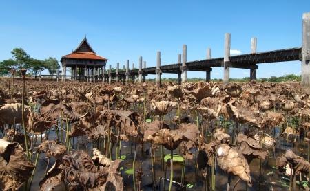 Thai house with wooden bridge in lotus pool photo
