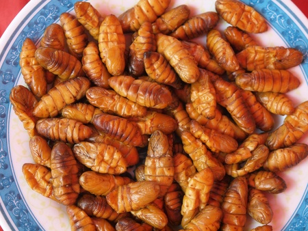 Dish of fried insects as food
