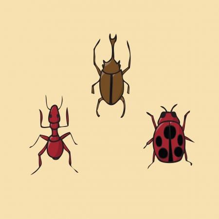 scarab: Insect icon ant ladybug scarab beetle Illustration