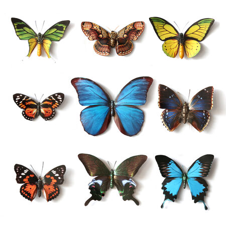 Stuffed insects Butterfly collection set Stock Photo