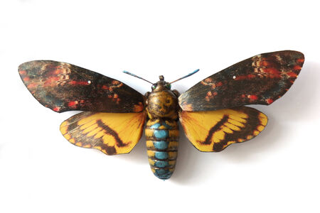 Stuffed insect Butterfly Acherontia Atropos