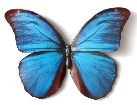 Stuffed insect Butterfly Morpho Menelaus