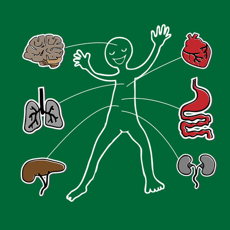 Body and organs human anatomy  Vector