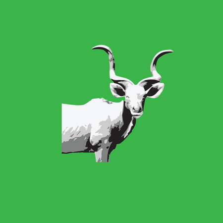 colorado mountains: Animal mountain goat graphic photo Illustration