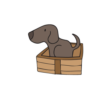 jack pack: Animal dog in wooden box