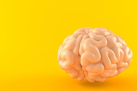 Brain isolated on orange background