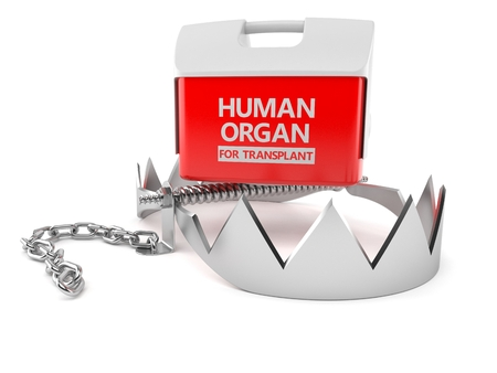 Cooler for human organ with bear trap isolated on white background. 3d illustration