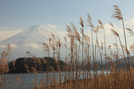 snowcapped: View of Mount Fuji from Kawaguchiko lake in march,Snow-capped Mount Fuji with clear sky background