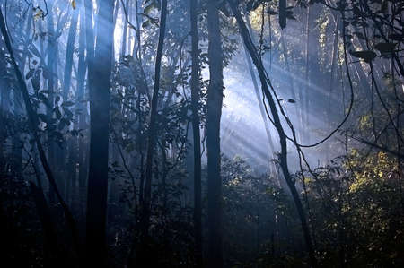 Early morning sun in a tropical forest photo