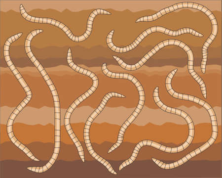 invertebrate: Vector design of earthworms in soil Illustration