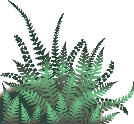 lush foliage: Vector illustration of fern leaves