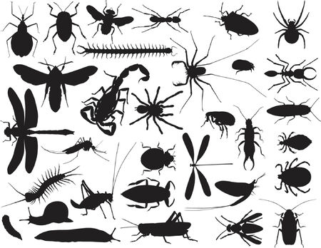 Collection of vector outlines of insects and other invertebrates
