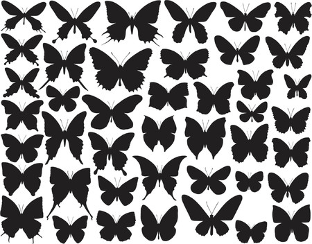 Selection of vector butterfly outlines and silhouettes Çizim