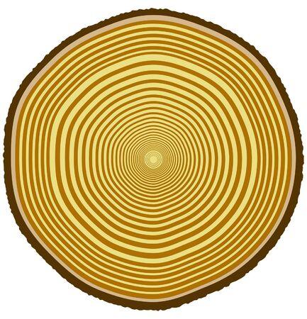 Vektor-Illustration von Baum-Ringe aus einem 33-Jahre alten Baum