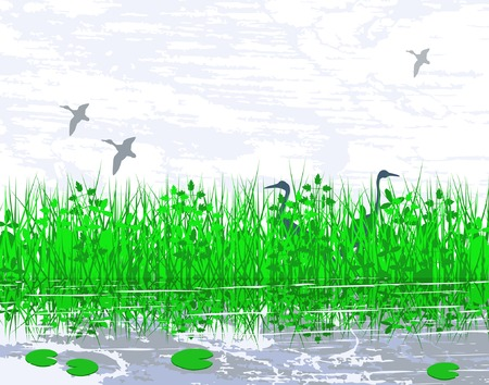Vector illustration of birds in a wetland habitat