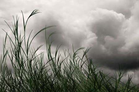 blustery: Grass blowing in the wind under gray skies Stock Photo