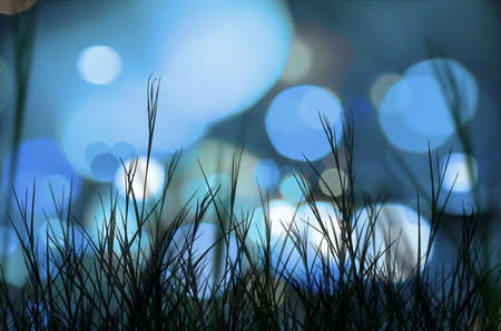 foreground: Background of blue blurred street lights with a grass foreground Stock Photo