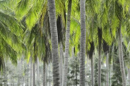 Plantation of coconut palms in coastal Thailand Stock Photo - 4788230