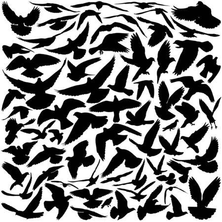 Siluetas de palomas en muchos diferentes posiciones de vuelos y ángulos