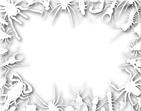 Border frame of outlines of insects and other invertebrates photo