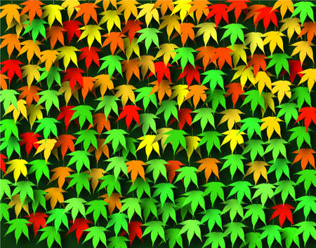 japanese maple: Background design of Japanese maple leaves in early fall