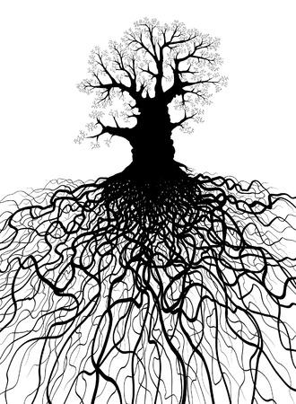 Ilustración editable de un árbol sin hojas de roble con sistema de raíz