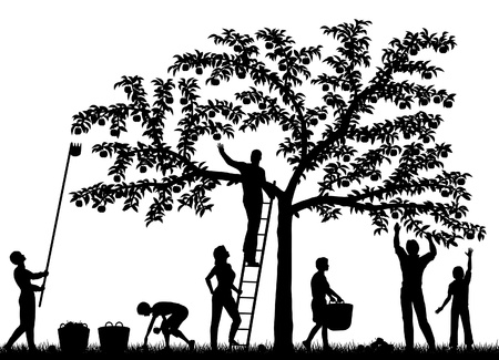 Editable silhouettes of a family harvesting apples from a tree with people and fruit as separate objects