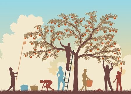 Editable vector colorful illustration of a family harvesting apples from a tree