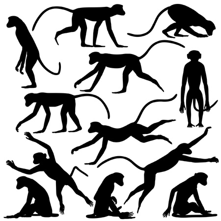 Set of editable vector silhouettes of langur monkeys in different poses