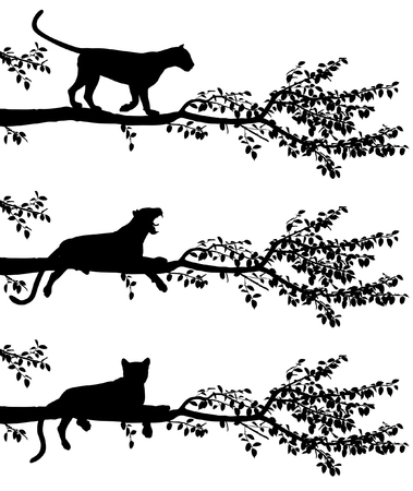 Set of three editable vector silhouettes of a leopard on a tree branch with leopards as separate objects Vectores