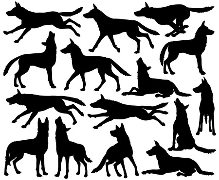 Set of editable vector silhouettes of wolves in different poses Ilustração