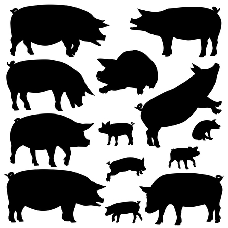 Set of editable vector silhouettes of pigs and piglets Ilustração