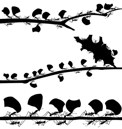 Set of EPS8 editable vector silhouettes of leaf cutter ants with all leaf fragments and ants as separate objects