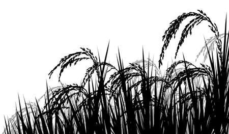 Illustrazione della siluetta di vettore dei seedheads maturi della pianta di riso pronti per raccogliere Archivio Fotografico - 74044620