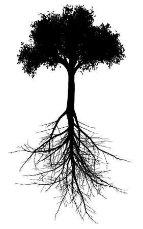 Bewerkbaar vector silhouet van een generieke boom met wortelsysteem Stock Illustratie