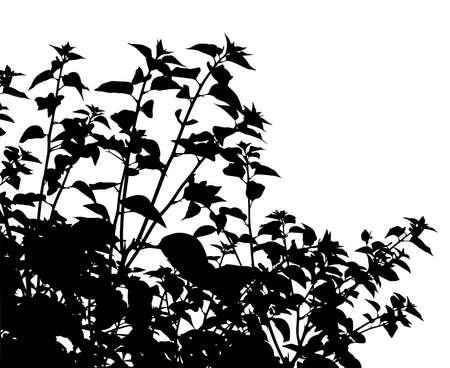 Editable vector silhouette of generic vegetation  Stock Illustratie